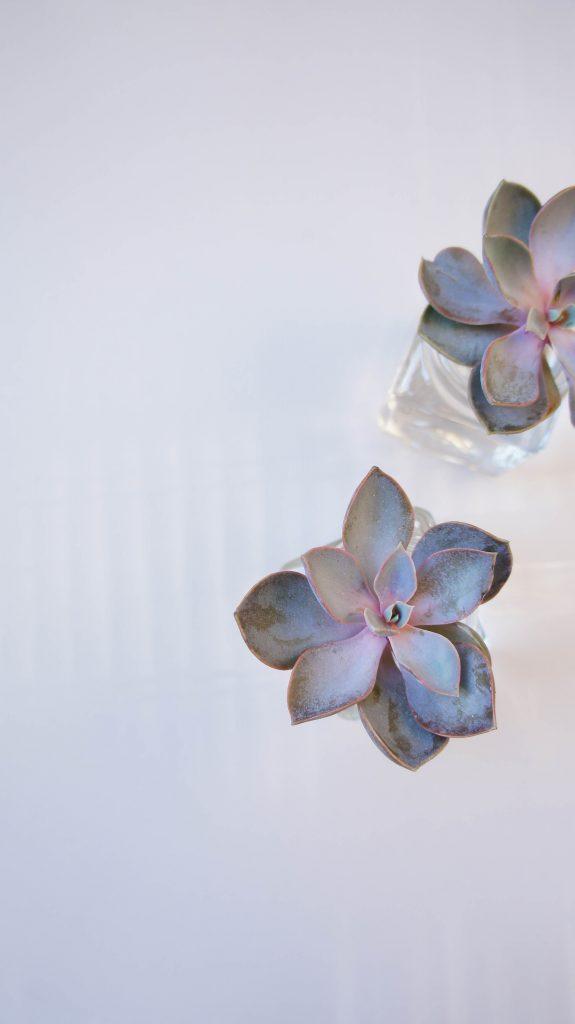Succulents - catalinapenciu.ro